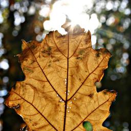 freetoedit leaf lightflare forest details pcintonature pcleaves