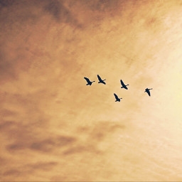 freetoedit outdoorshots birds silhouttes againstthesky