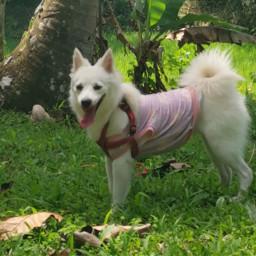 myshiro mydog