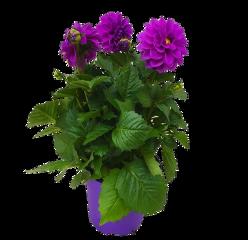 flower flowers flowerpot freetoedit