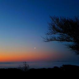 nightlife moon fog