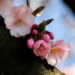 freetoedit spring springtime springishere mood