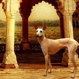 chippiparai sighthound dog india tour