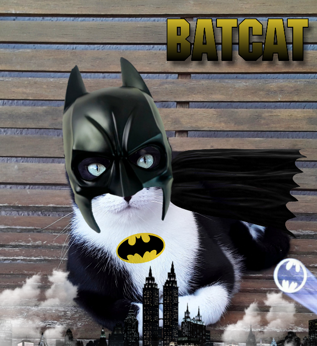 #freetoedit #batman #batcat #cat #superhero #hero #surreal #gotham #gothamcity #logo #cape #surreal #city #clouds #smoke #logo #shadow #picsart #mask  #ecsuperpet cape:Google