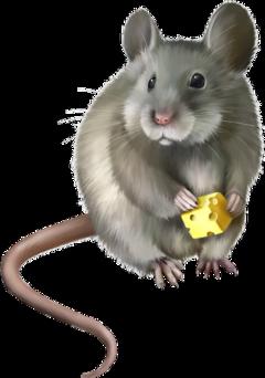 rat animals rodent freetoedit scrats