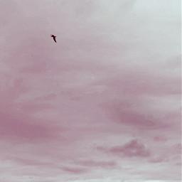 freetoedit pastel bird sky clouds