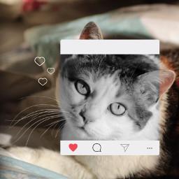 freetoedit cat lovely cute instagram