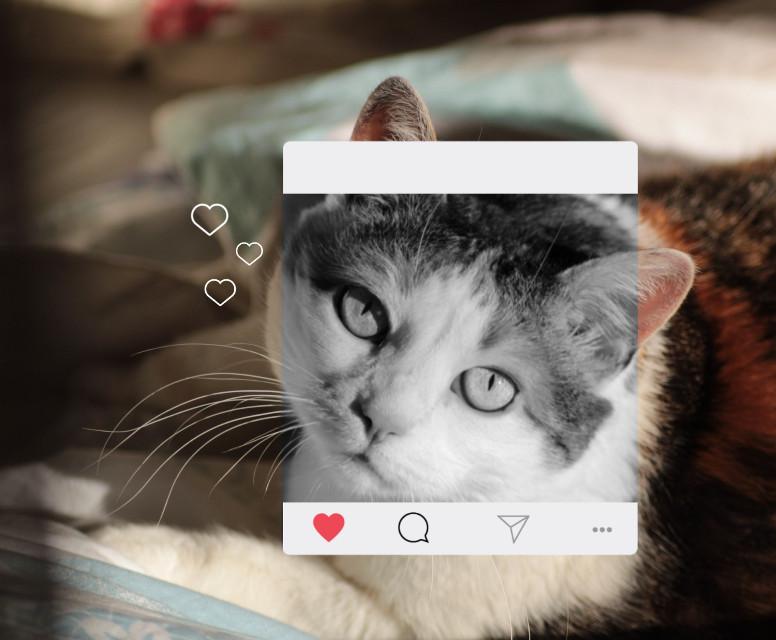 #freetoedit #cat #lovely #cute #instagram #frame