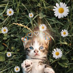 haveagreatday editedtowin kittykatzke freetoedit irckitten