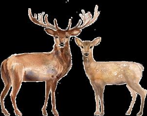 freetoedit watercolor handpainted deer stag