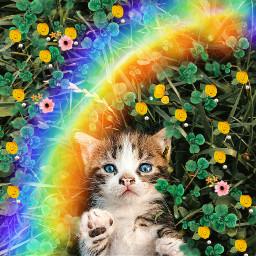 starcat freetoedit irckitten kitten