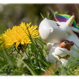 chubby unicorn toy toyphotography flower freetoedit