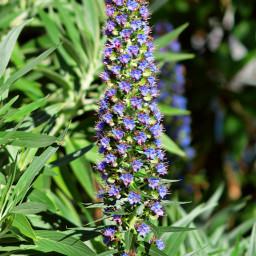 freetoedit pccolorsofnature colorsofnature flowerphotography honeysuckle