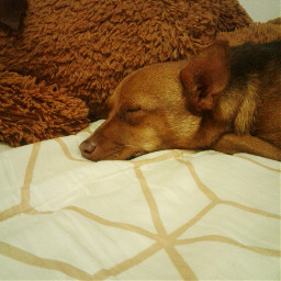 sleeptime dogs doglover🐕 pchappypetday happypetday