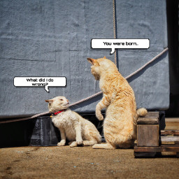 freetoedit callout cats funny humor eccallout