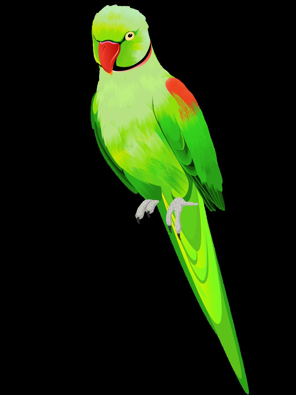 #ftestickers #bird #parrot #green