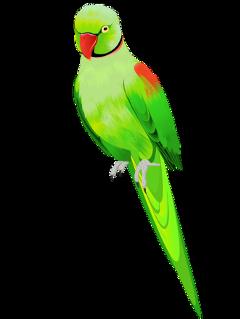 ftestickers bird parrot green freetoedit