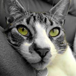 colurful freetoedit cat petsandanimals cute eccolorsplasheffect