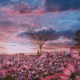 freetoedit sprind season flowers sky🌿☁ ircblossoming
