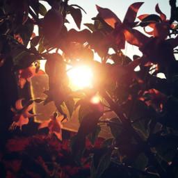 sunrise morning morningsunriselight beautiful flowers freetoedit