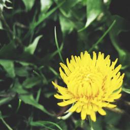 flower nature peddles myphoto myphotography