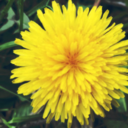 flowers peddles yellow grass nature