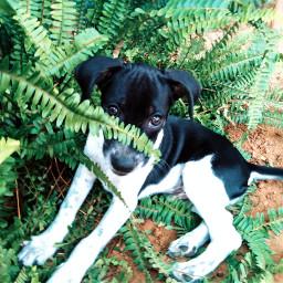freetoedit cute dog petsandanimals plant
