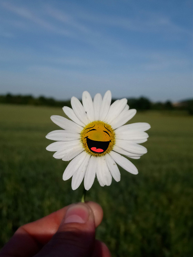Have an awesome day #daisydaze #daisy #flower #stickers #happiness  #freetoedit