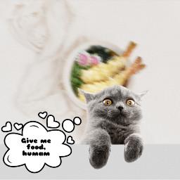 freetoedit cat funny ircgourmet gourmet