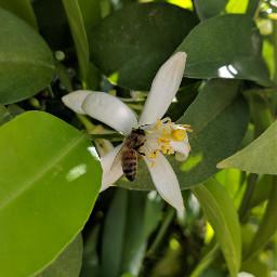 freetoedit bee honey honeybee trees