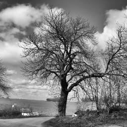 blackandwhite photography nature tree myphoto