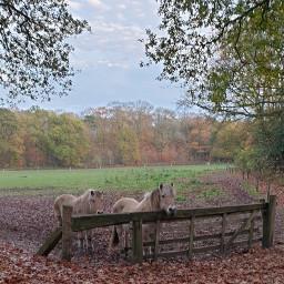 pchorses fall animals horses naturephotography freetoedit