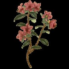 aesthetic aesthetics floral flower flowers freetoedit