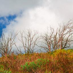 ghostfollowers dontfollowme nature natural trees freetoedit