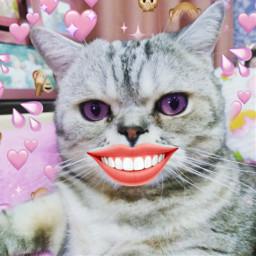 freetoedit улыбка смешнаяфотка кот котик