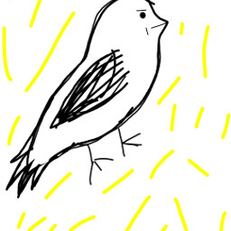 really dcspringbirds springbirds