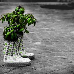 boots colorsplash blackandwhite blossom freetoedit