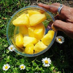 pcfridayfeels fridayfeels picknick pineapple flowers