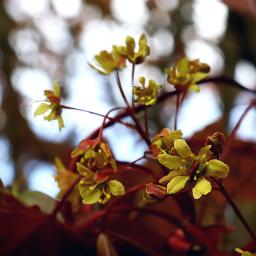 nature blossom flower closeup tree freetoedit