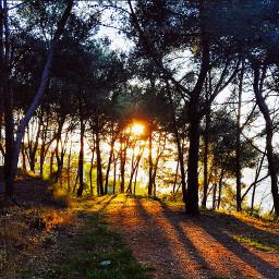 forest trees treelove treesilhouette sunset freetoedit