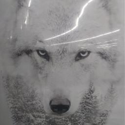 wolf whitewolf