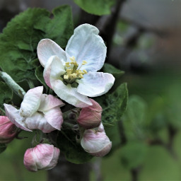 blossom photography garden myphoto natur