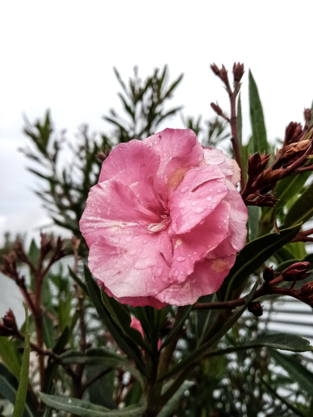 #cotacachi #imbabura #ecuador #flower  #freetoedit