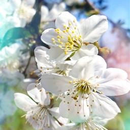 freetoedit blossom