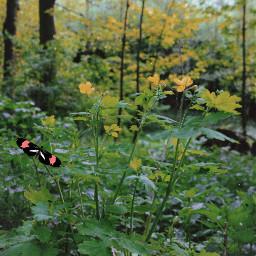 freetoedit nature spring
