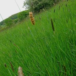 freetoedit shade green gras naturephotography