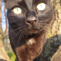 pcpetsofpicsart petsofpicsart cat coke cokacola pcmyfavshot