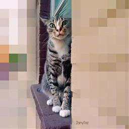 catsofpicsart ecpixeleffect pixeleffect cat pixel freetoedit