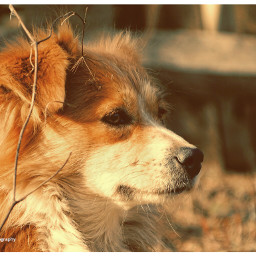 freetoedit bobita dogs animal dogphotography dogday portrait photography sony