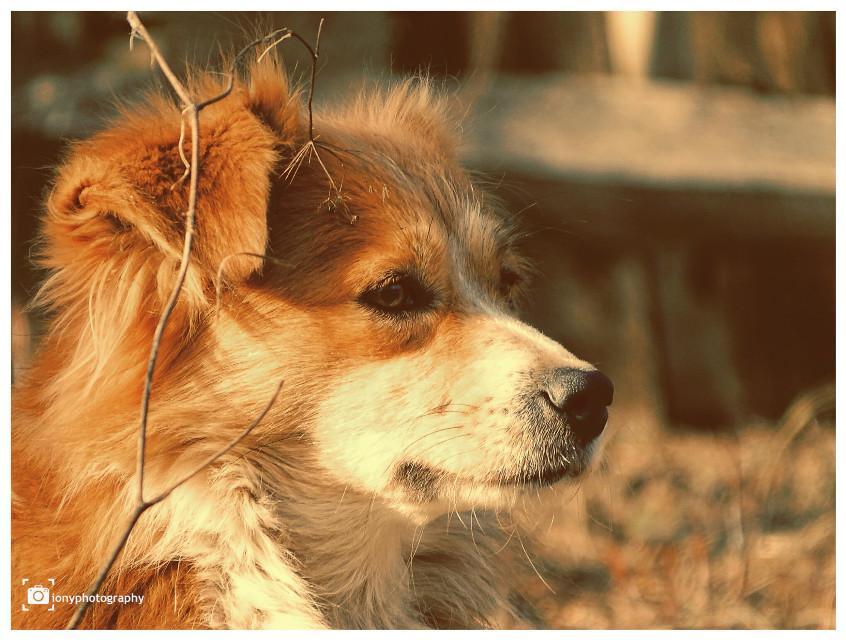#freetoedit 🐶🐕🍗#bobita #dogs # dog #animal #dogphotography #dogday #portrait #photography #sony dsc-hx 350